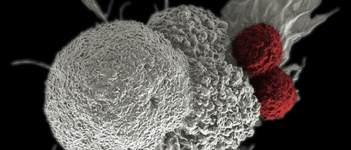 national-cancer-institute-kWAPbD_zaEU-unsplash